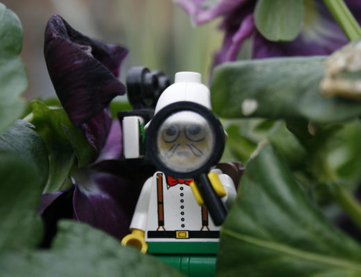 "A Lego person with a pith cap looks through a magnifying glass with an awed expression. ""Lego Explorer"" by JonoTakesPhotos is licensed under CC BY 2.0."